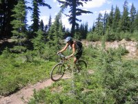 In the woods with the Mountain Bike