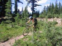 Nel bosco con la Mountain Bike