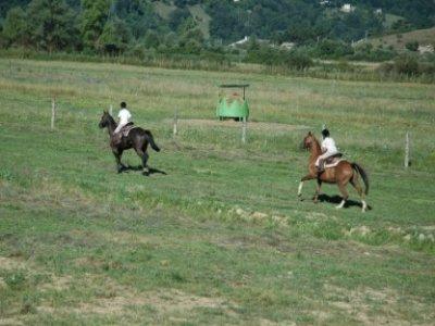 Shenandoah Ranch Western Riding