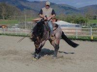 Domando il cavallo