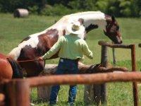 Interagendo con i cavalli