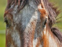 Cavalli Oasi