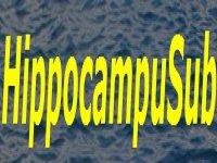 HippocampuSub
