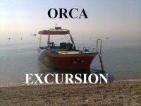 Orca Excursion