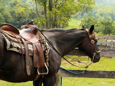 Serra delle Quaglie Horses