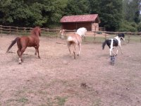 I cavalli del ranch