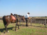 Uno dei nostri splendidi cavalli