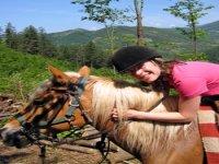 Amore equino