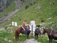 In montagna con i cavalli