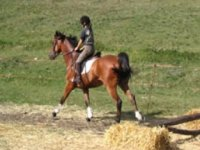 Lezione di equitazione
