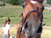 12 splendidi cavalli