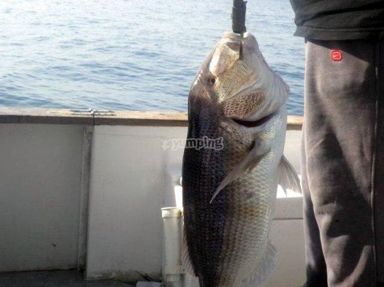 Pesca in Sicilia