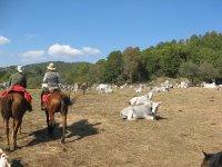 Suggestive passeggiate a cavallo