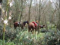 Escporando la natura a cavallo