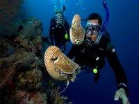 Incontri sottomarini meravigliosi