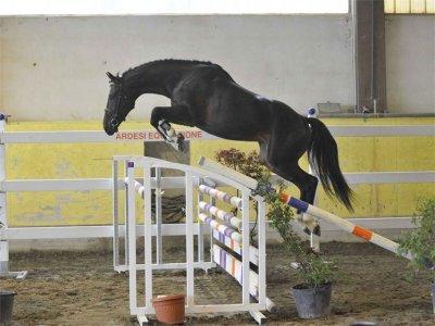 Horse Jumping International a.s.d.