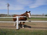 I cavalli de La Cascina di Carola