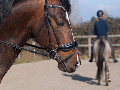 PaintBull Passeggiate a Cavallo