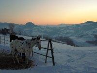 Trekking invernali