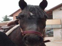Scuola di equitazione ad Asti