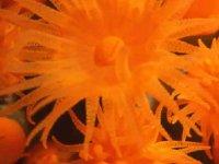 Marine daisies