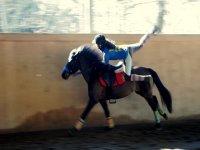 Acrobazie a cavallo