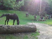 In mezzo ai cavalli