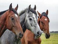Tre meravigliosi cavalli