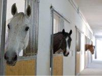 Equestrian center Salento