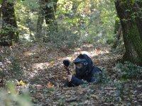 Cercando di mimetizzarsi nel bosco