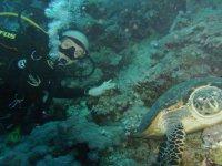 Diving guidato