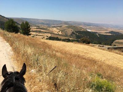 Cavalli & Cavalieri Asd