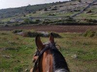 Cavallo e campagne