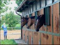 Le stalle