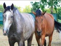 Scuola di Equitazione Bergamo