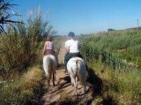 Cavalli anglo arabo sardi