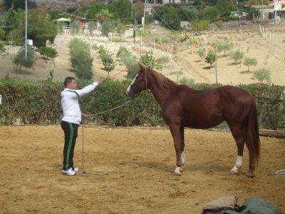 Amici del Cavallo 2