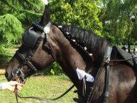 Addobbi da cavalli