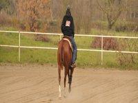 Servizi equestri