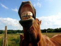 Pronto a divertirti con uno dei nostri cavalli?