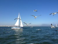 Sailboat with seagulls