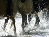 Corsi di equitazione sulle Dolomiti