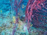 Vieni a scoprire il mare della Calabria