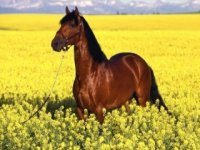 A cavallo in Sicilia fra mare e monti