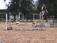 Addestramento equestre agonistico