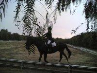 Preparazione equestre in maneggio
