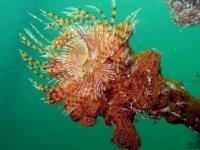 Incredibili specie marine