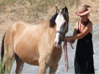 Passeggiate e trekking equestri