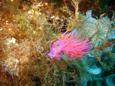 1 Immersione subacquea Senza attrezzatura Cagliari