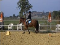 lezioni di equitazione a Castiglione